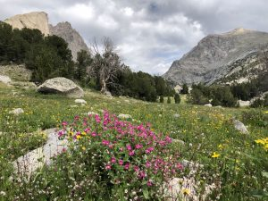 Wild flowers grow, Cirque of the Towers